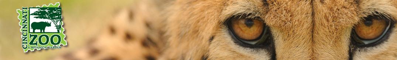Cheetah Run 5K header